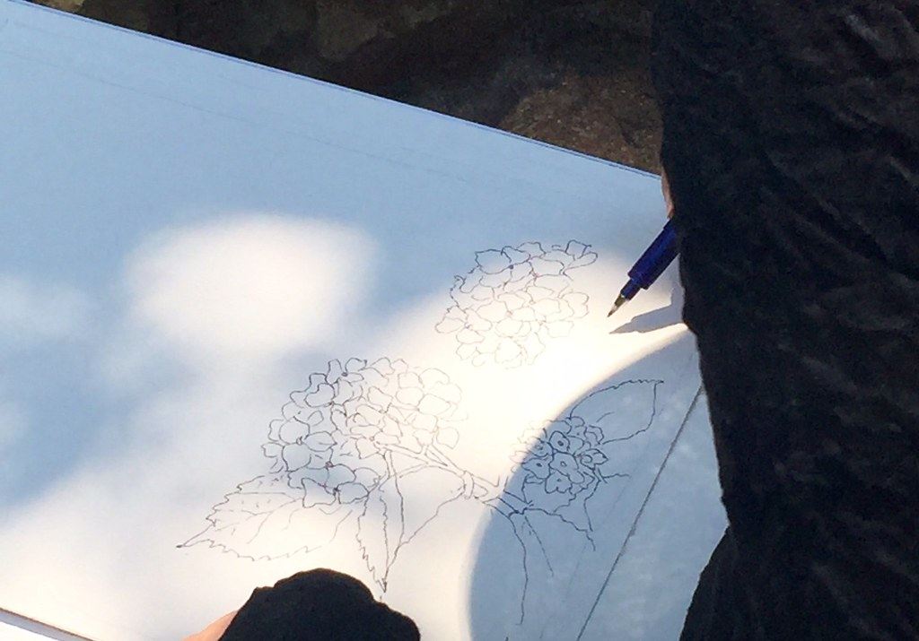 Drawings at Hydrangea festival at Hakusan Shrine