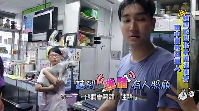 Choi siwon save dog