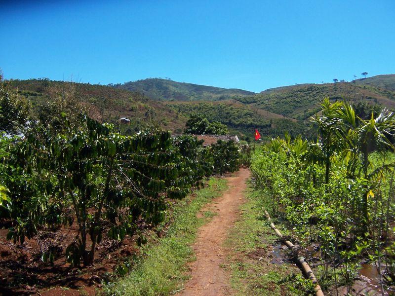 Coffee plantation Vietnam
