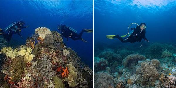 Diving Labengki 3