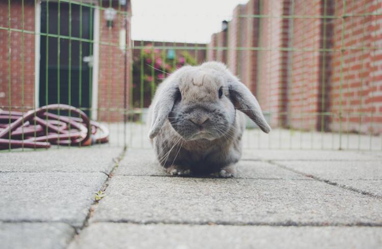 Bunny Snapshots   foreverpetite.net