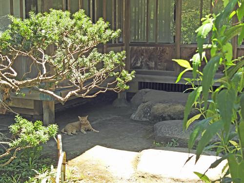 Cats at Sankeien Park, yokohama, Japan