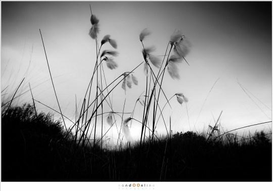 Veenpluis oog boven het landschap