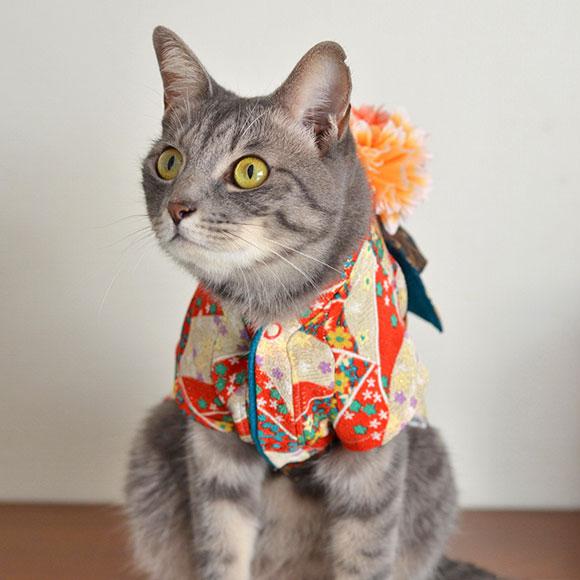 Cat Kimono wear
