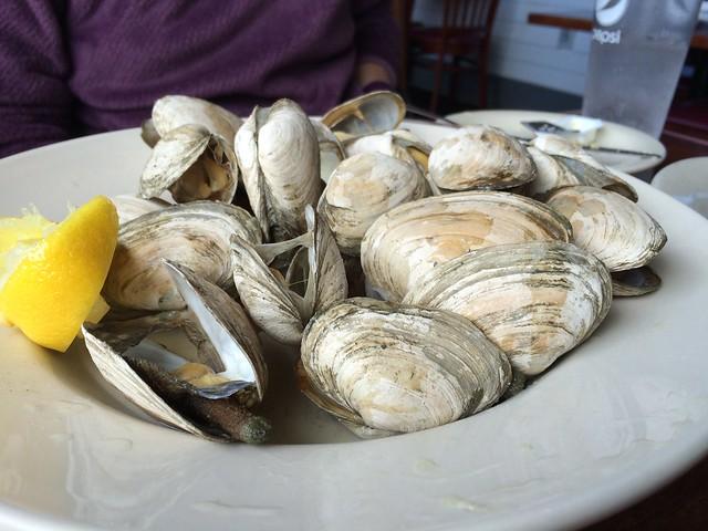clams_acadia