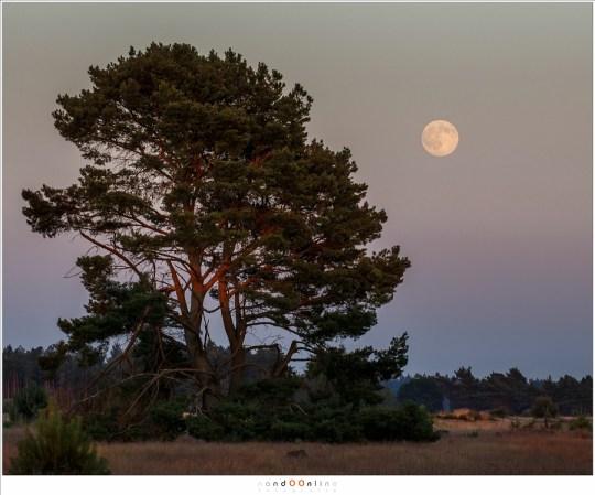 Het beste moment om de volle Maan te fotograferen: laag aan de hemel zodat het landschap mee gefotografeerd kan worden, en bovendien in de Gordel van Venus