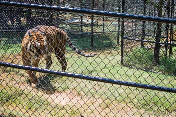 Tiger Creek Wildlife Refuge Texas