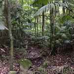 06 Viajefilos en Australia, Eungella NP 025