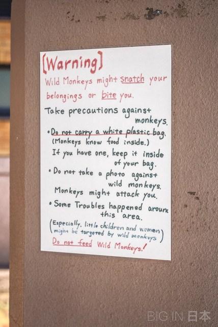 Carteles previniendo de los monos salvajes