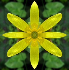 A perfectly symmetrical flower