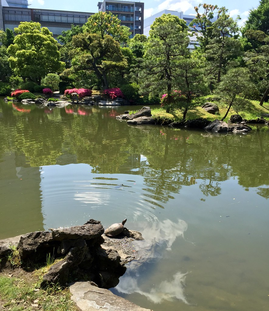 A turtle sunbathing at the Old Yasuda Garden in Ryogoku