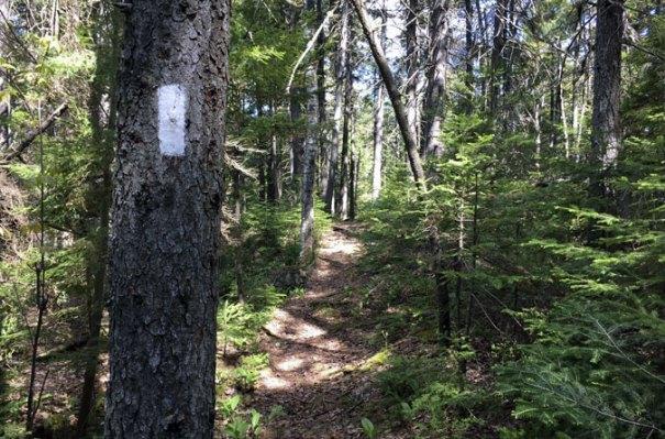 AT Centennial Trail NH
