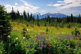 Mt. Revelstoke Nat. Park: Meadows in the Sky