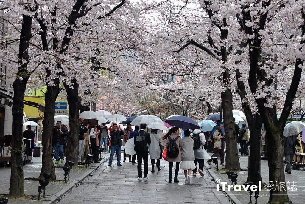 京都赏樱景点 祇园白川 (4)