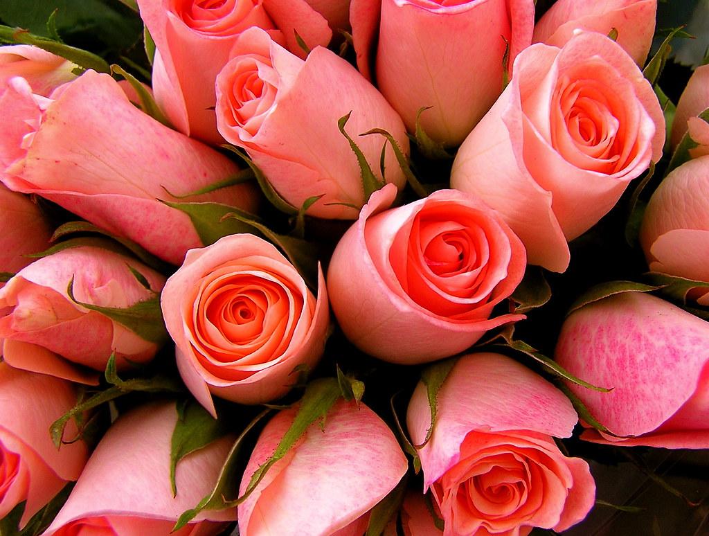 Photo:bouquet By:Muffet