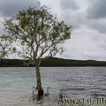 05 Viajefilos en Australia, Fraser Island 008