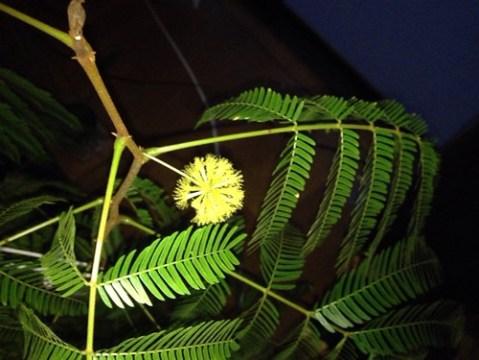 everflesh_bloom2015 (5)