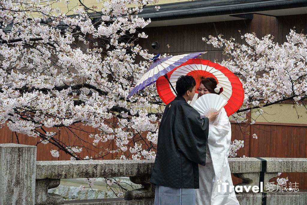 京都赏樱景点 祇园白川 (26)