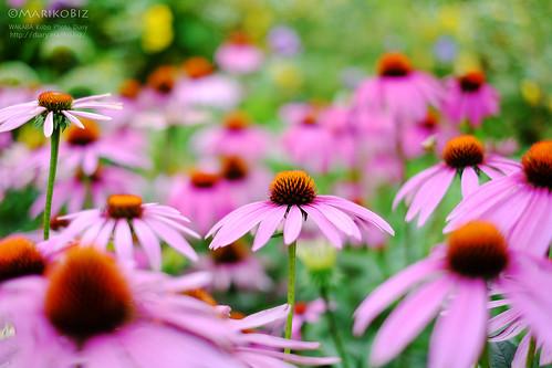 花園フォレスト 20150627-DSCF7712