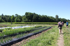 Organic Crop Production Class Visits High Mowing Trial Fields_8137