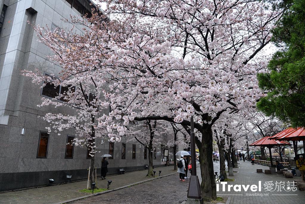 京都赏樱景点 祇园白川 (2)