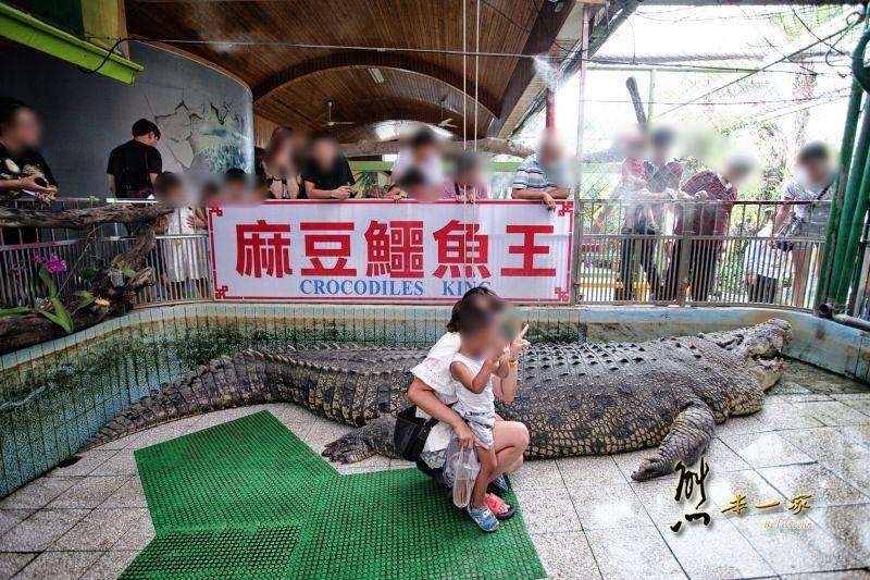 [臺南世界珍奇動物親子景點] 麻豆鱷魚王生態教育農場   Trip-Life熊本一家の旅攝生活