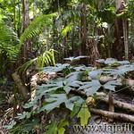 02 Viajefilos en Australia, Mapleton Falls 002