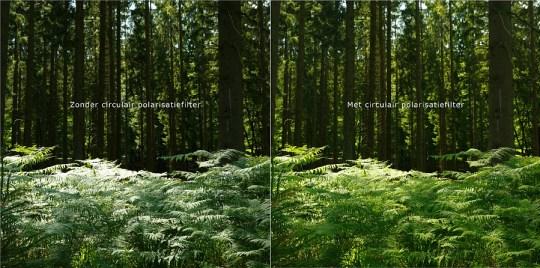 Misschien de meest onbekende toepassing van een polarisatiefilter: lichtreflectie op bladeren wegfilteren.