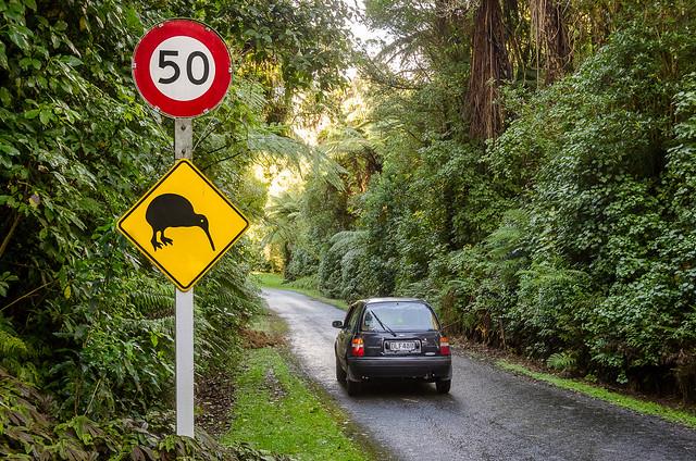 Drive carefully: Around 30 Kiwi live here