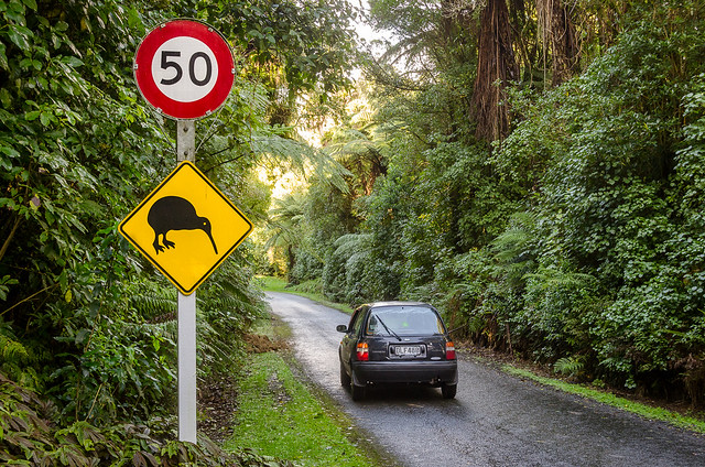 Drive carefully: Around 30 Kiwi live here