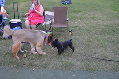 105 Puppy Love