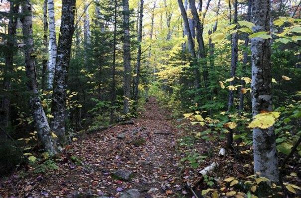 Hancock Notch Trail Beginning