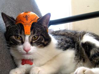 Cat - Orange