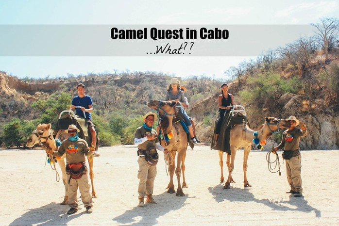 Camel Quest in Cabo ...What?? | Perogy and Panda