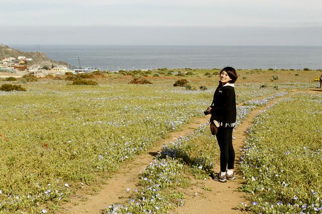 Anita - Desierto Florido Costero - Los Hornos