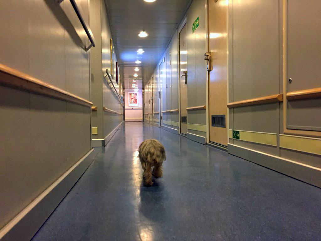 Viajar con mascotas a Reino Unido: Pau paseando por el barco Viajar con mascotas a Reino Unido Viajar con mascotas a Reino Unido desde España 23032313323 d34d981490 b