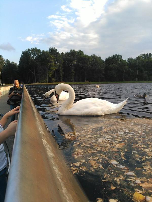 IMG-20160925-WA0092 Parque Bokrijk, naturaleza en esencia - 32332149033 5bcd702e37 c - Parque Bokrijk, naturaleza en esencia