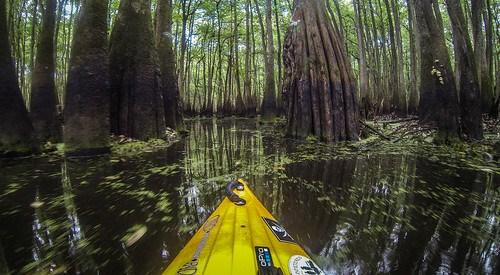 Sparkleberry Swamp with LCU-181