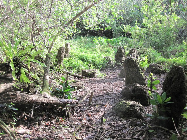 Picture from the Pagat Caves Trail