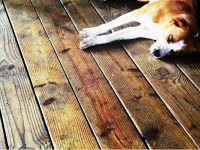 Laminate Flooring: Protect Laminate Flooring From Dogs
