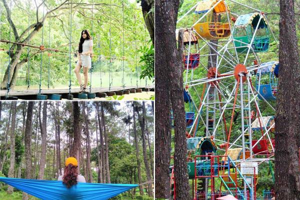 Hutan Punti Kayu 2