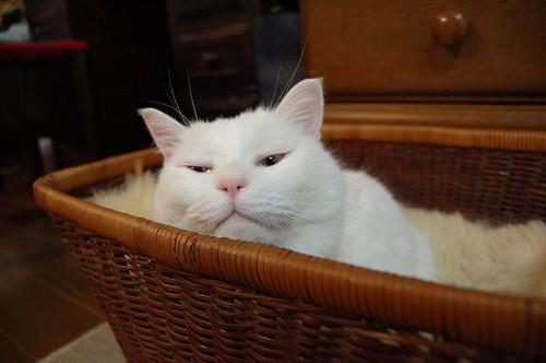 the cranky cat