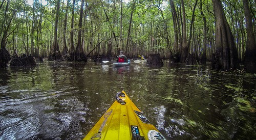 Sparkleberry Swamp with LCU-191