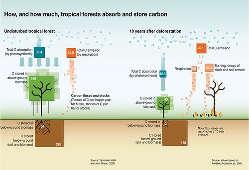diagram of a tropical forest lighting relay panel wiring how and much forests absorb store carbon grid