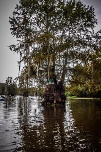 Sparkleberry Swamp with LCU-21