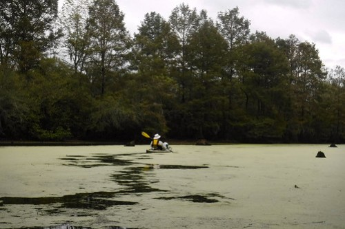Duckweed Trail
