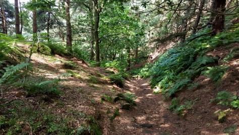 Matlock Walk