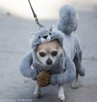 squirrel costumes | Squirrels Squirrels Squirrels