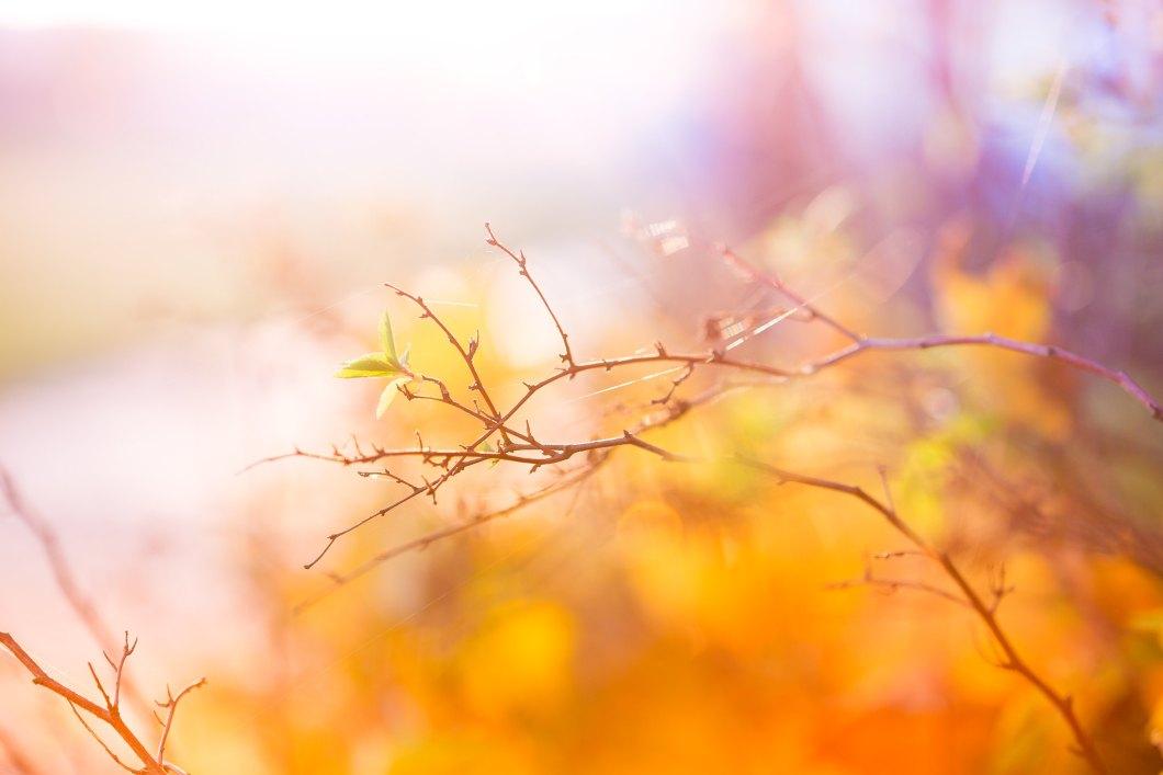 Imagen gratis de una rama en otoño