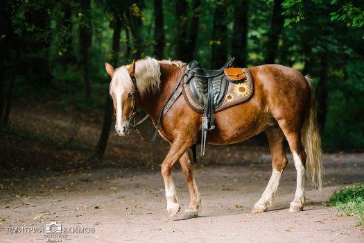 Лошадка для фотосессии в Шуваловском парке